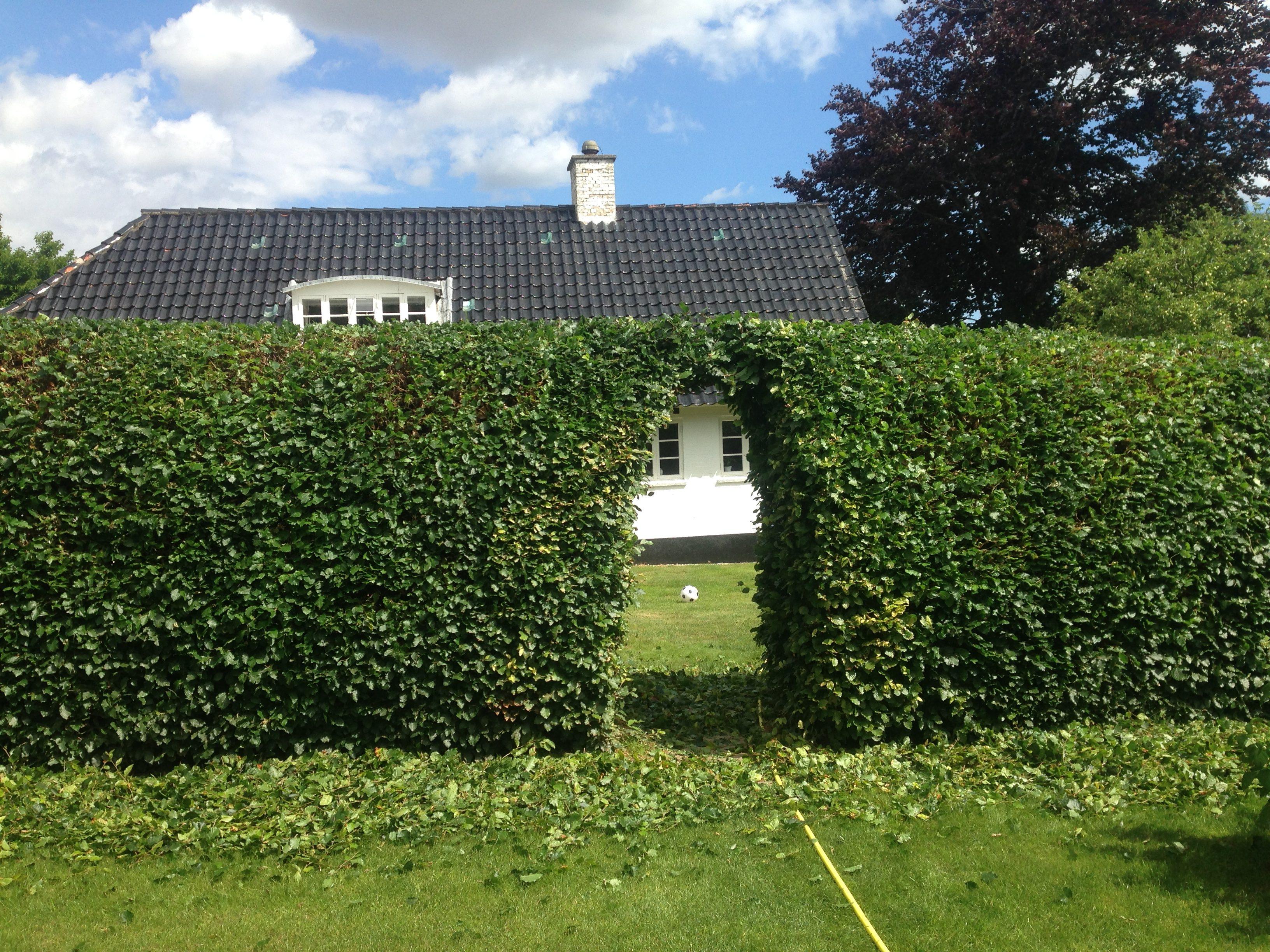 DR Tømrermester – haveservice 5