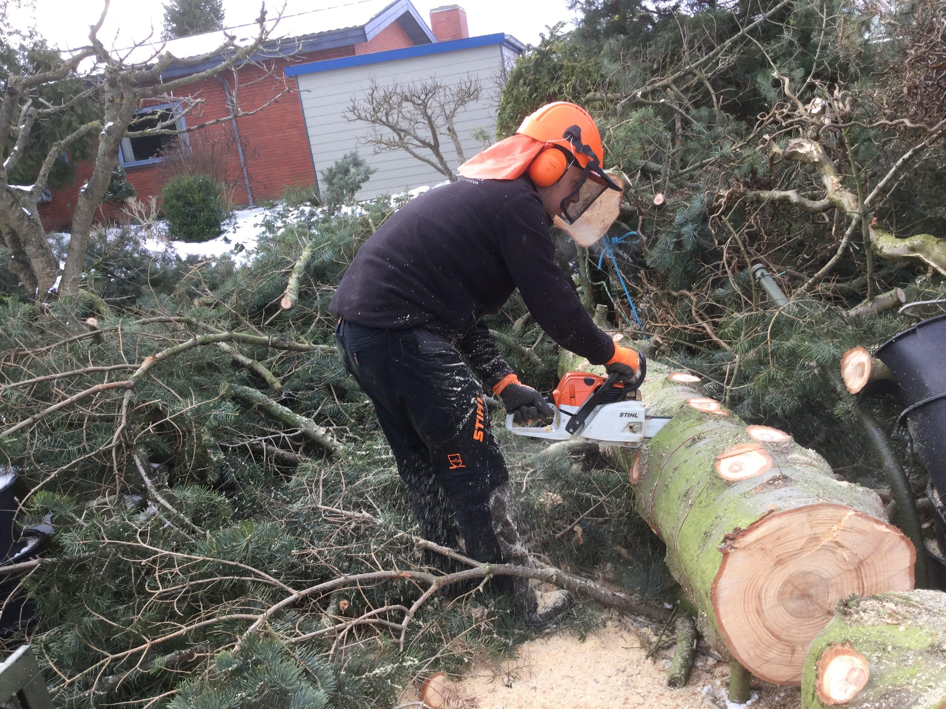 DR Tømrermester – træfældning 10