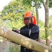 DR Tømrermester – træfældning