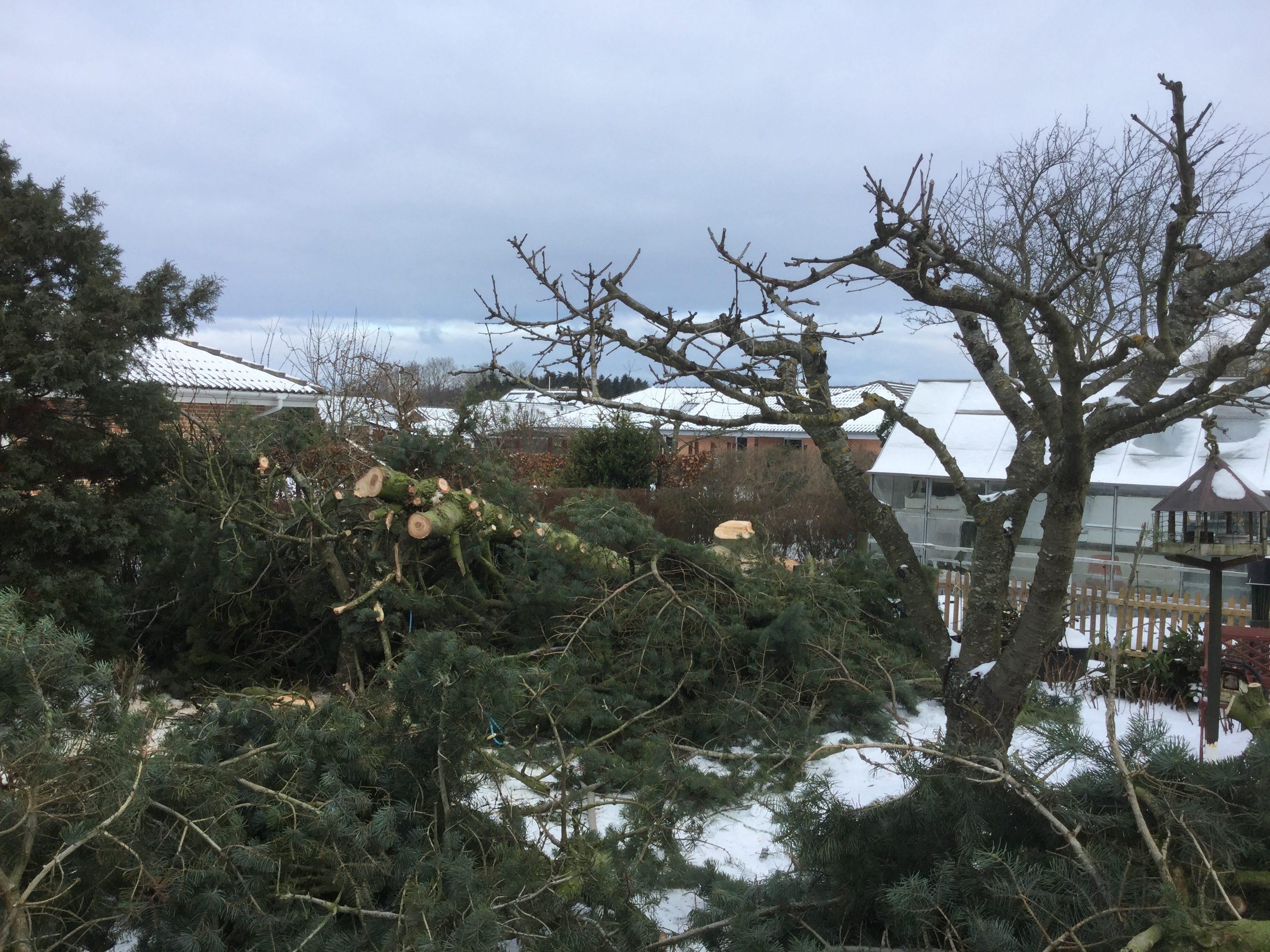 DR Tømrermester – træfældning 7