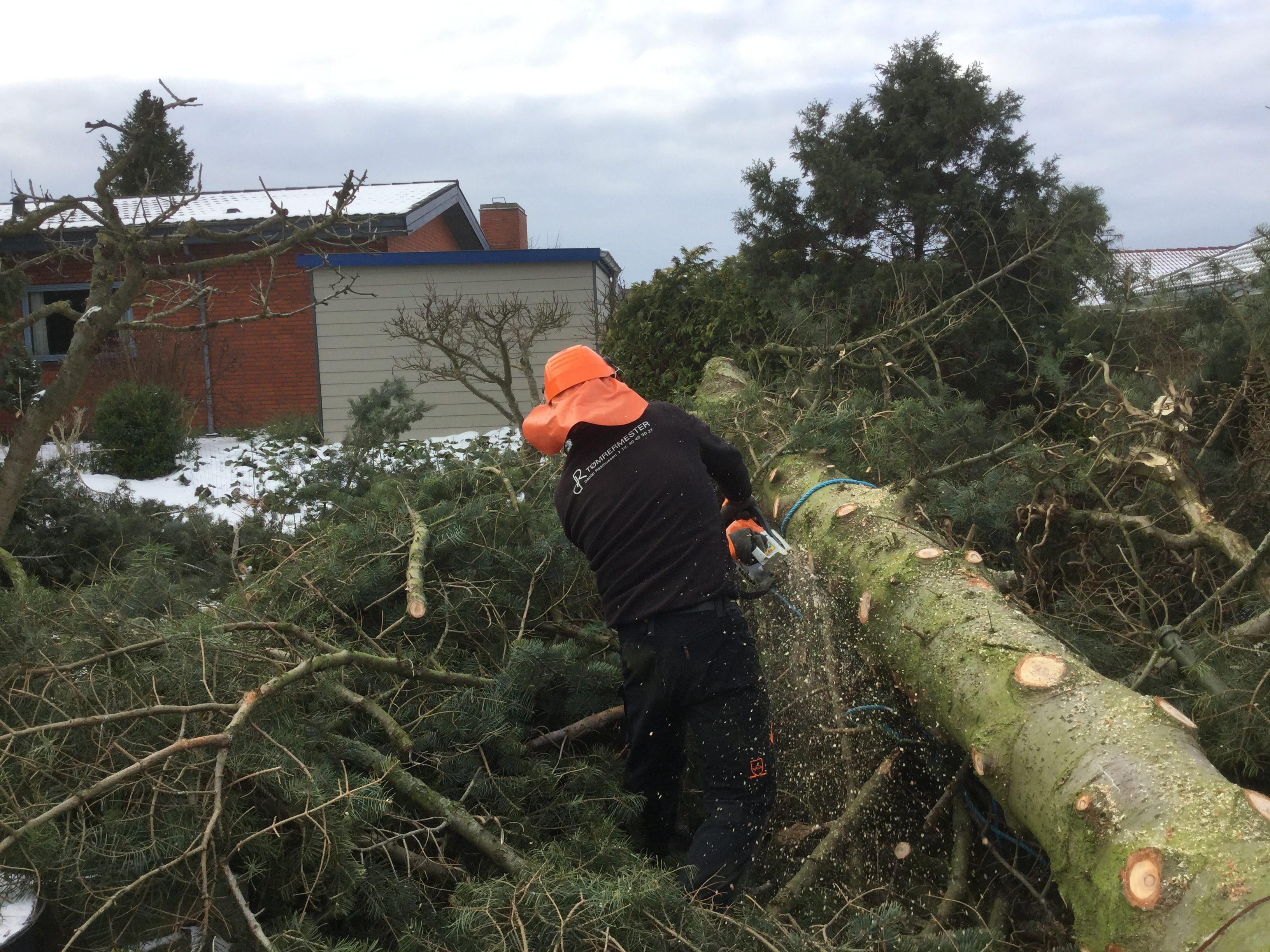 DR Tømrermester – træfældning 9